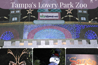 Experience a WIld Wonderland at Tampa's Lowry Park Zoo