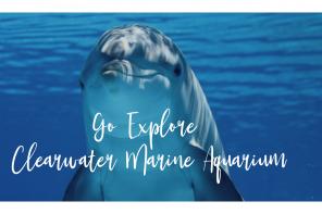 Go Explore Clearwater Marine Aquarium