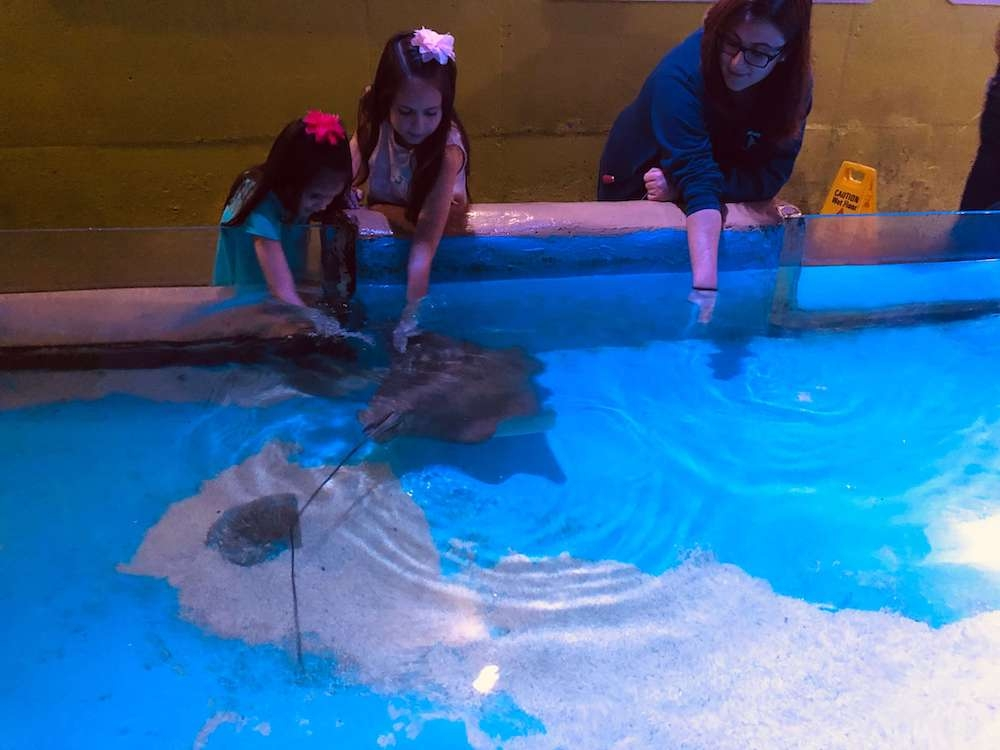 Go Explore Clearwater Marine Aquarium and Be Winter's Valentine